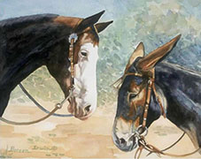 Equestrian Watercolor Painting by Doreen Irwin